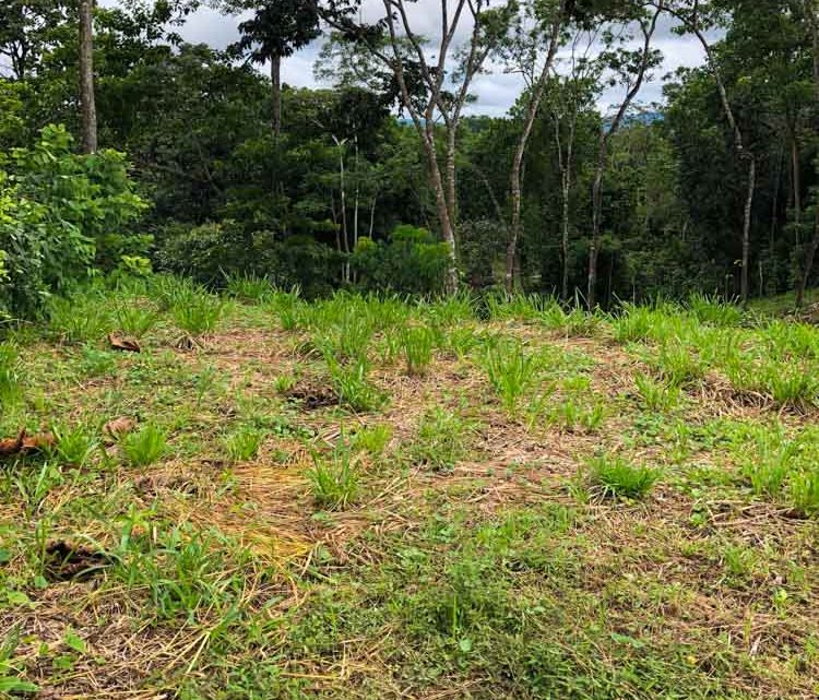Best deal! Property for sale in Motezuma Costa Rica