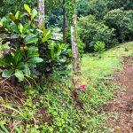 dream land for sale in Montezuma