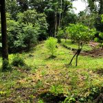 Perfect land for permaculture