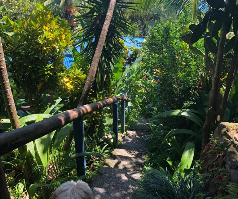 Stairs, tropical garden and ocean view