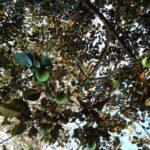 Ecological tropical farm for sale in Montezuma Costa Rica