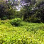 Real estate near the beach for sale in Cabuya Costa Rica