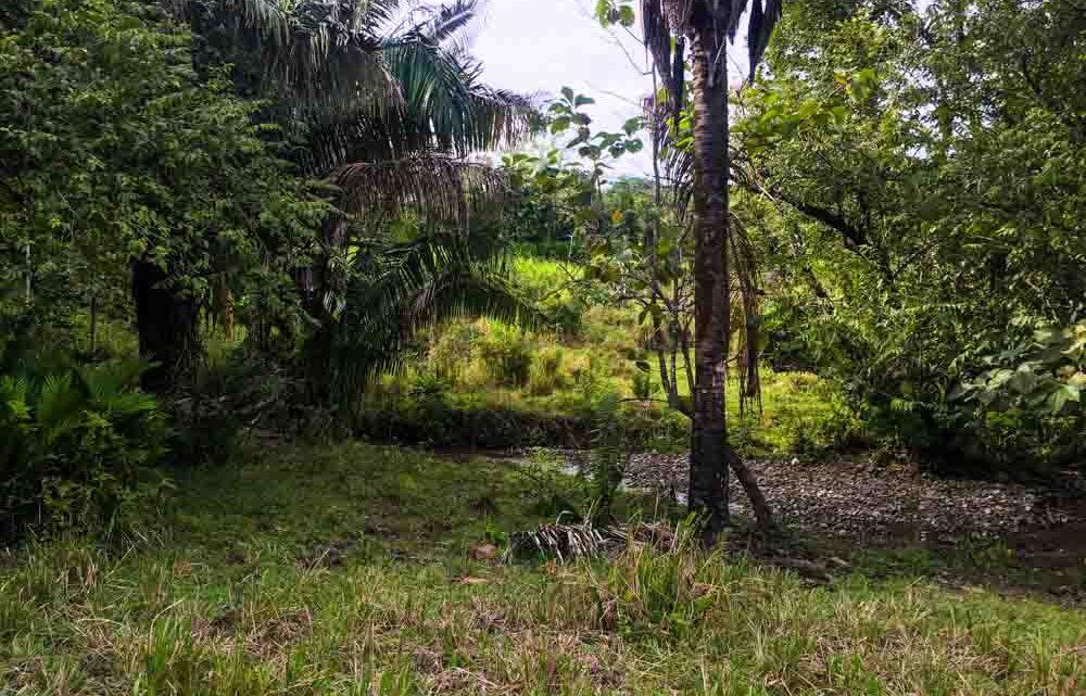 Farm for sale in Cabuya Costa Rica