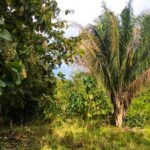 Ocean view land for sale in Cabuya Costa Rica