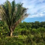 Real estate with ocean view near the beach in Cabuya Costa Rica
