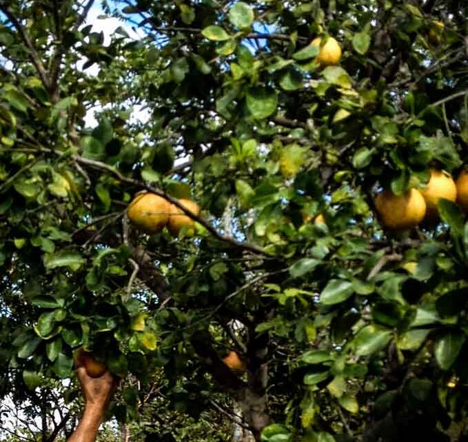 Groomed ecological orchard farm for sale in Montezuma Costa Rica