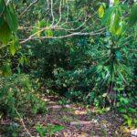 Costa Rica best commecial real estate deals
