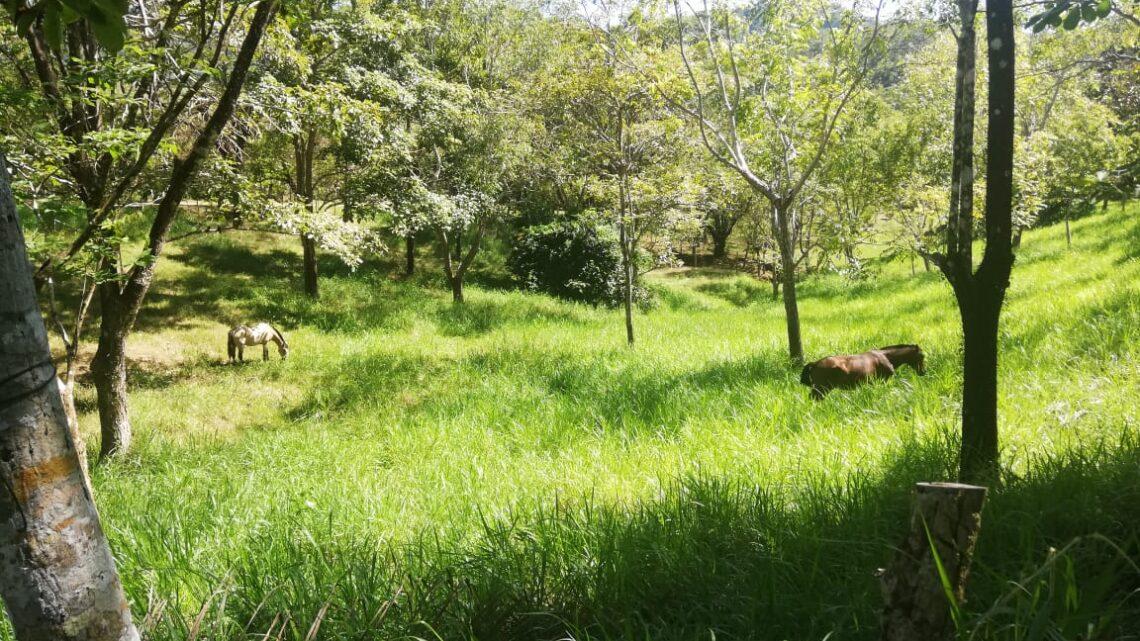 Tambo Costa Rica Real Estate