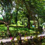 Real Estate opportunity in Montezuma Costa Rica