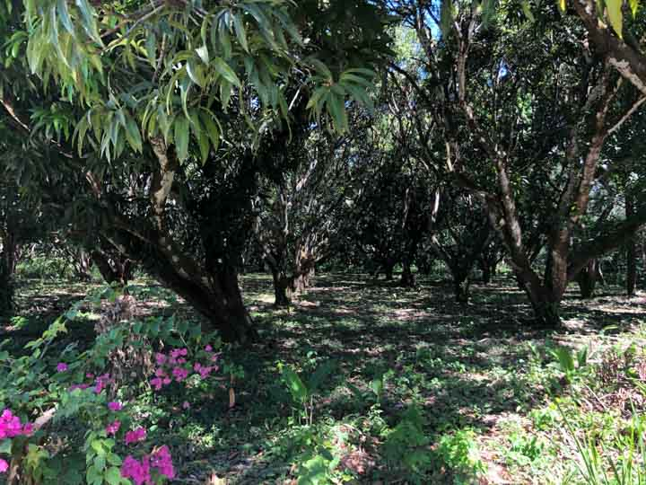 Cabuya lot for sale