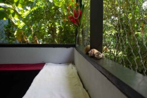 Property for sale in Cabuya Costa Rica (2)